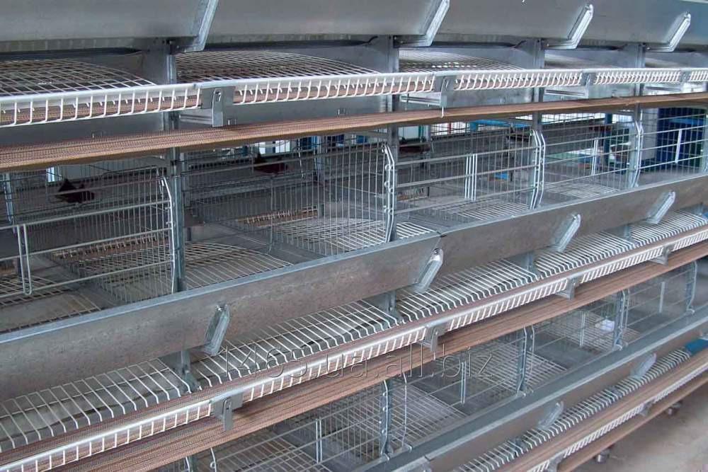 Celular la maquinaria para la cultivación del rebaño industrial de las gallinas-gallinas ponedoras OKN-SH