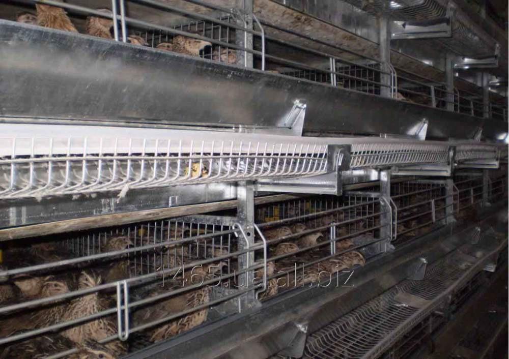 Устаткування кліткове для птахівництва