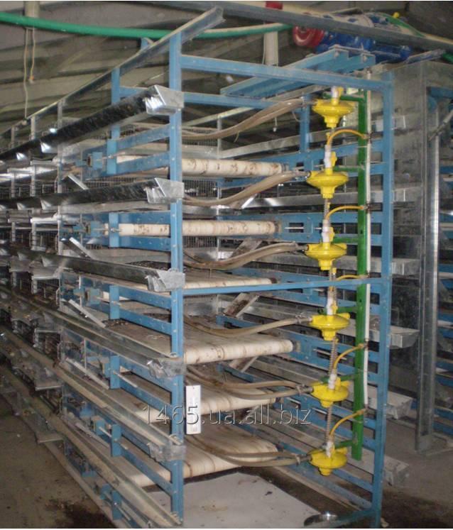 Клеточное оборудования для выращивания перепелов ОКП-4