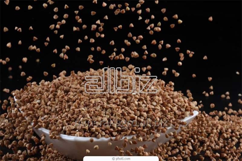 Купить Семена гречки Оранта