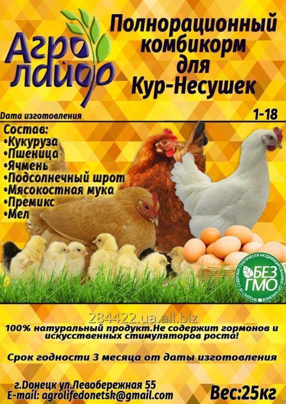 Цыплята несушки комбикорм