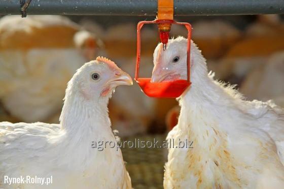 Поилки для птицы, б/у поилки для птицы