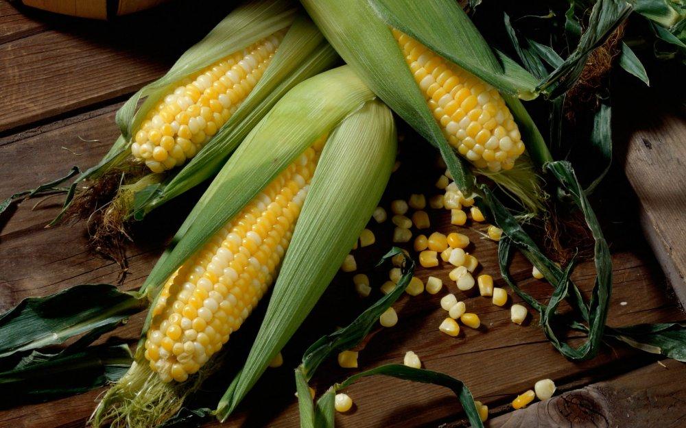 Семена кукурузы Нови Сад НС-2622 (NS-2622)