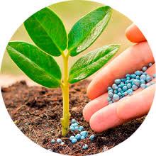 Купить Средства для защиты растений