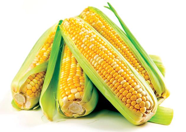 Семена кукурузы Евралис ЕС Пароли
