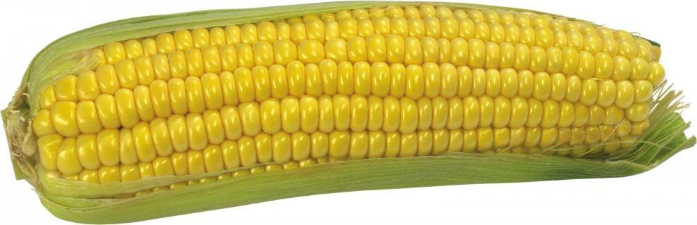 Семена кукурузы Евралис ЕС Сенсор