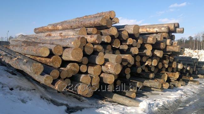 Купить Сосна,сухостой технологический,дрова