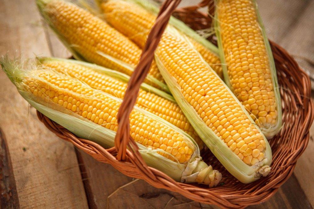 Семена кукурузы Леонидов 276 СВ
