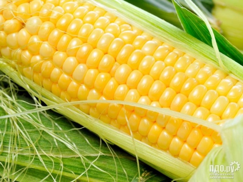 Семена кукурузы гибрид Голд F1
