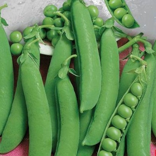 Купить Семена гороха овощного