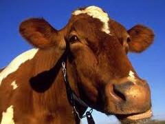 Купить Корм для животных дробленные картофельные чипсы