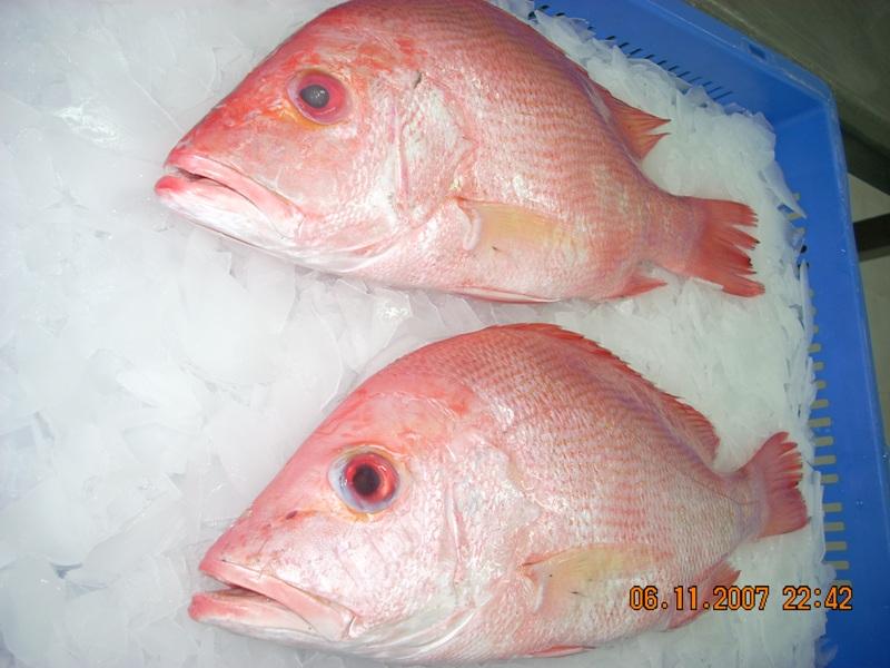 Красного цвета рыба