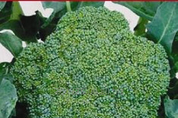 Капуста брокколи свежая