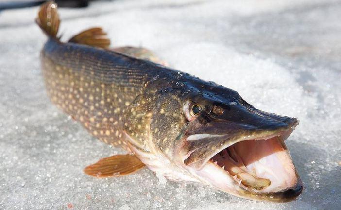 Спрей-активатор Fish XXL Фиш ХХЛ для зимней рыбалки