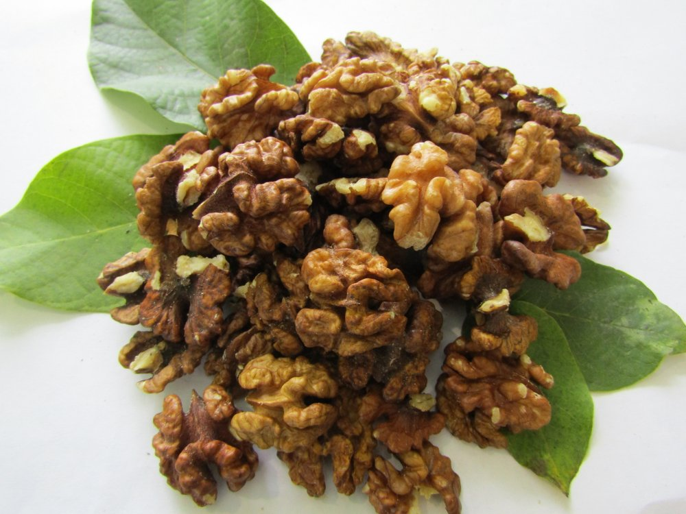 Walnut Bernstein Schmetterling