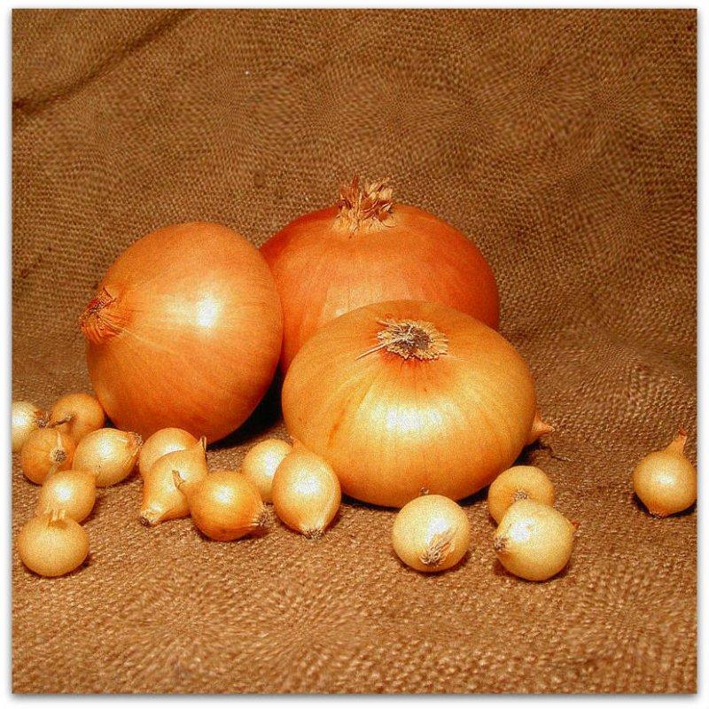 Купить Семена лука Штутгарт