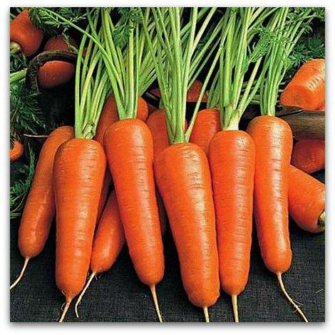 Купить Семена моркови Шантане