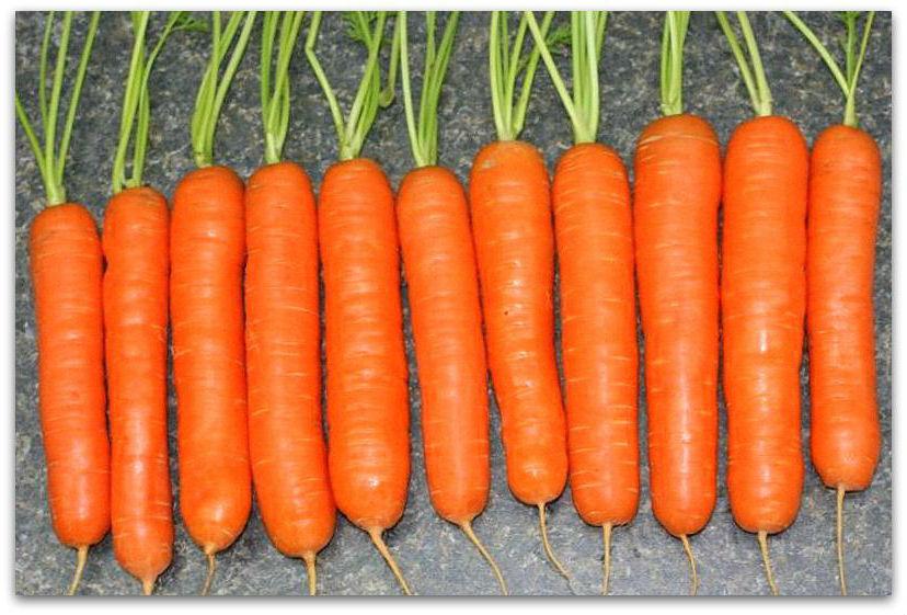 Купить Семена моркови Нантская
