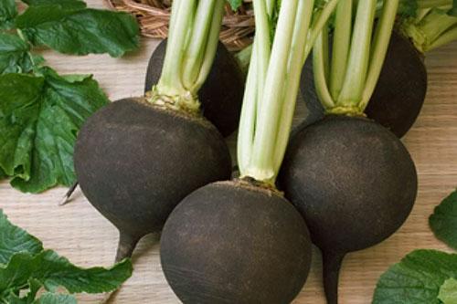 Купить Семена редьки Черная зимняя