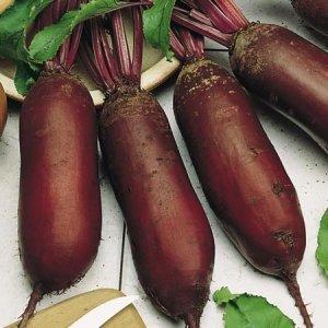 Купить Семена свеклы столовой Цилиндра