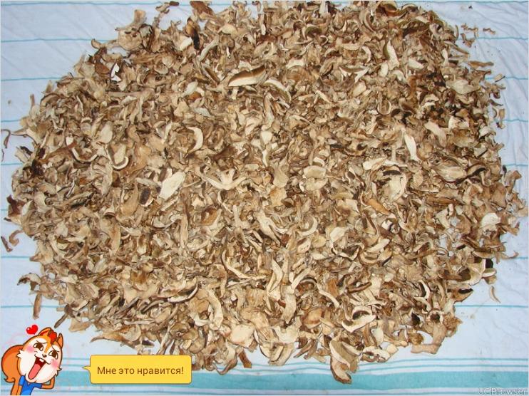 Купить Белый сушенный гриб