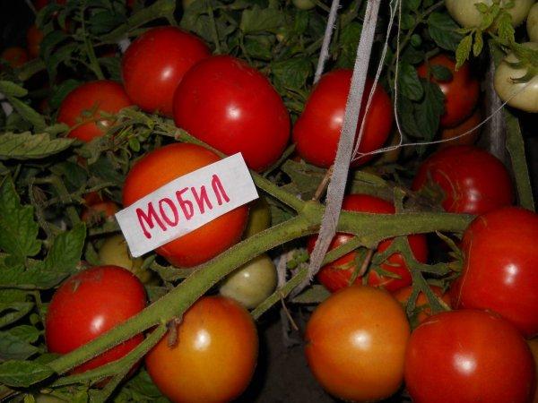 Купить Семена томата Мобил