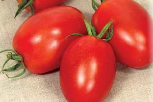 Купить Семена томата Лагидный