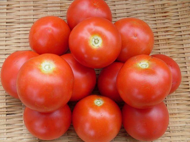 Семена томата Факел