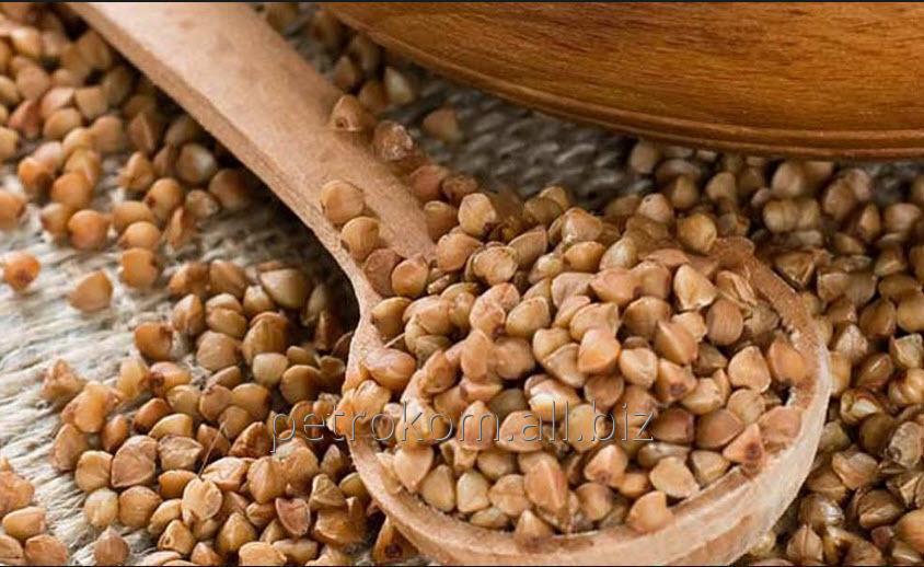 Купить Семена Гречихи