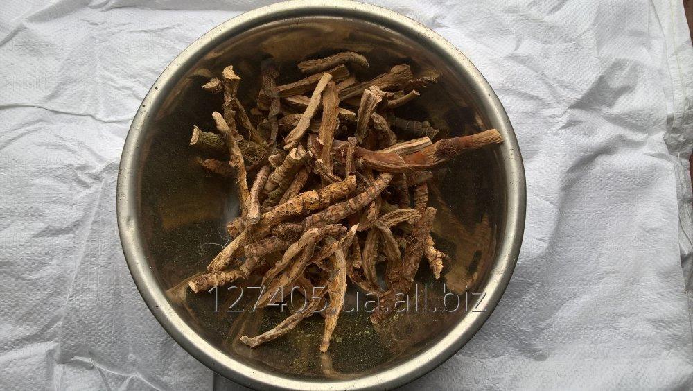 Купити Корінь аїру (Acorus calamus, Radix)