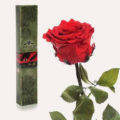 Одна долгосвежая роза Florich в подарочной упаковке Алый рубин 5 карат, короткий стебель