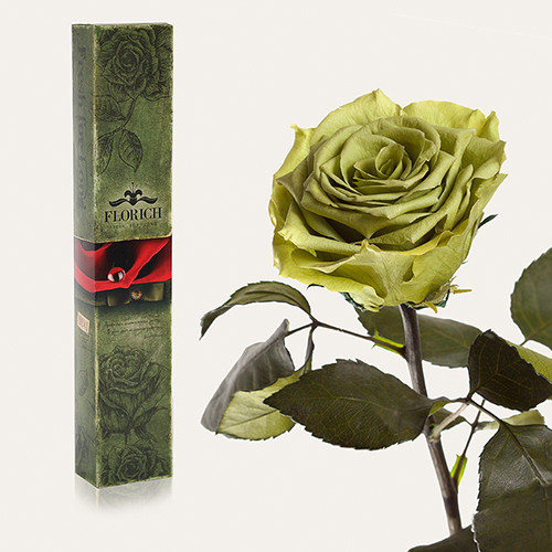 Одна долгосвежая роза Florich в подарочной упаковке. Лаймовый Нефрит 5 карат, короткий стебель