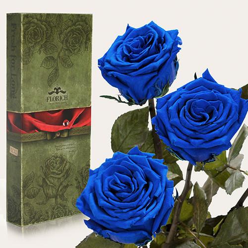 Три долгосвежие розы Florich в подарочной упаковке. Синий Сапфир 5 карат, короткий стебель