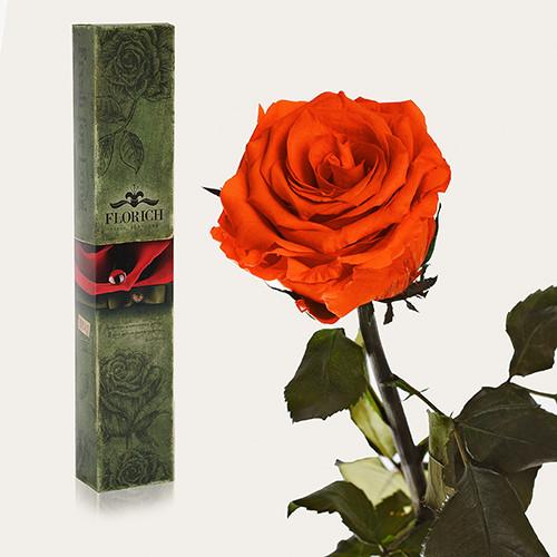 Одна долгосвежая роза Florich в подарочной упаковке. Огненный янтарь 7 карат, средний стебель
