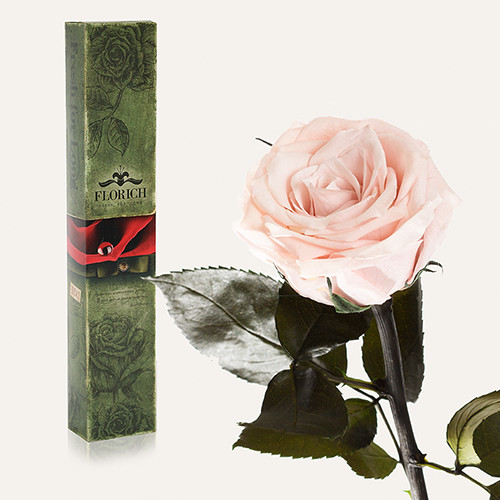 Одна долгосвежая роза Florich в подарочной упаковке. Розовый Жемчуг 7 карат, короткий стебель