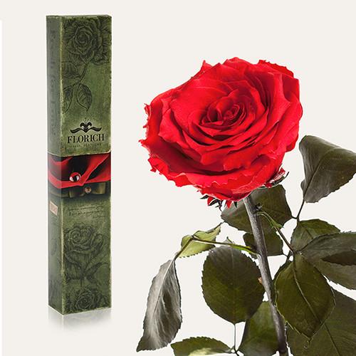 Одна долгосвежая роза Florich в подарочной упаковке. Красный рубин 7 карат, средний стебель