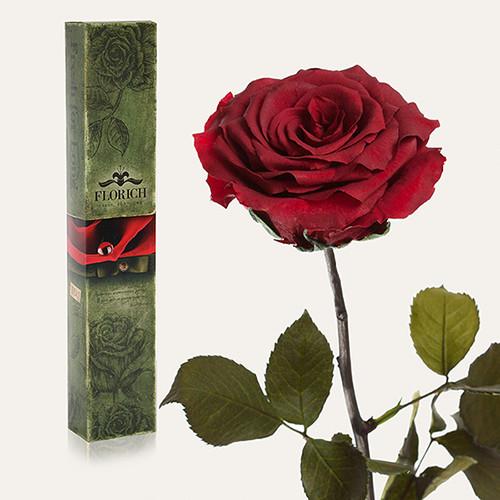 Одна долгосвежая роза Florich в подарочной упаковке. Багровый гранат 7 карат, средний стебель