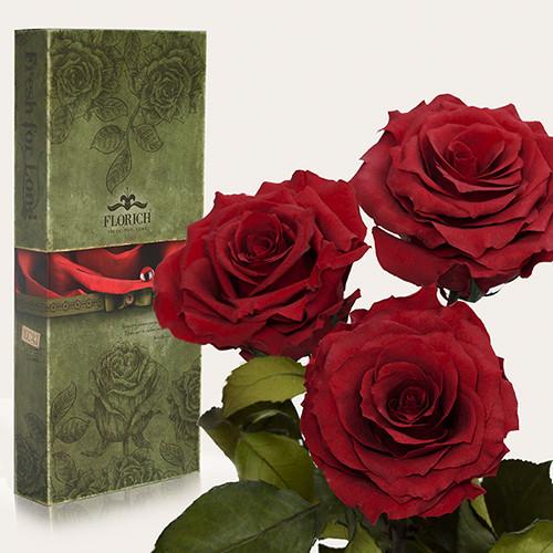 Три долгосвежие розы Florich в подарочной упаковке. Багровый гранат 7 карат, короткий стебель