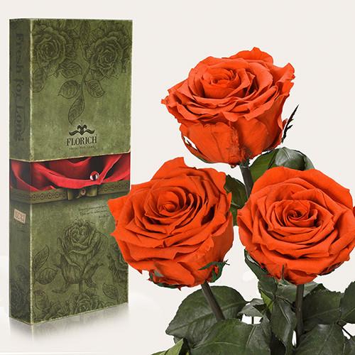 Три долгосвежие розы Florich в подарочной упаковке. Огненный янтарь 7 карат, средний стебель