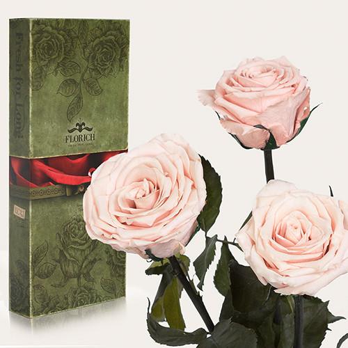 Три долгосвежие розы Florich в подарочной упаковке. Розовый Жемчуг 7 карат, средний стебель