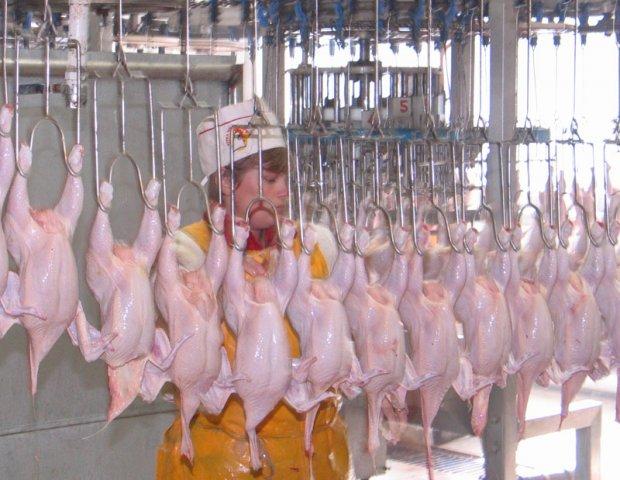 Купить Голень цыпленка-бройлера