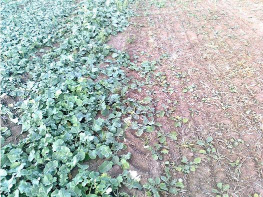 Buy Biogrowth factor of plants
