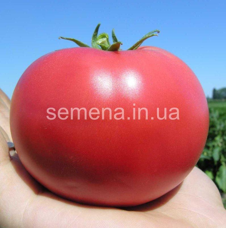 Семена томаты ( Помидоры ) , более 90 сортов :Лагидный, Черри красный и  желтый, Оранж,  Хурма, Розовая сливка, Розовый гигант, для соления, маринования, сока, Флорида , Монталбан , Тропикал