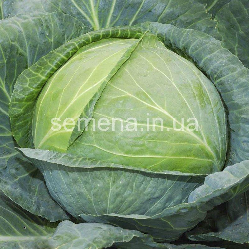 Семена капусты , более 90 сортов: белокочанная (листовая), брюссельская, пекинская,  савойская, китайская, цветная, брокколи, кольраби