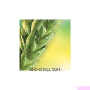 Регулятор роста растений Хлормекват-Хлорид 750