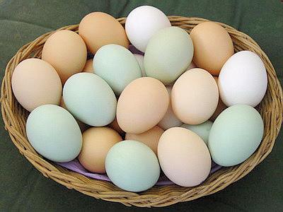 Яйца инкубационные бройлер (партия от 5000 шт.)