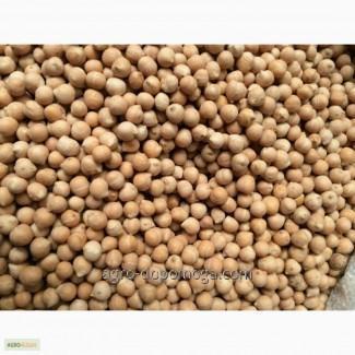 Seeds of chick-pea of Zekhavit (Israel)