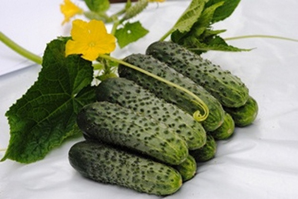 Купить Семена огурца Мимино F1 партенокарп. Lucky Seed 1000г