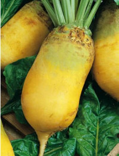 Купить Эккендорфская желтая свекла кормовая Семена Украины 0,5кг