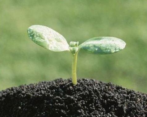 Купить Торф для улучшения почвы Украина